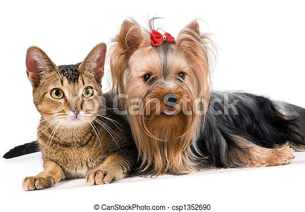 The terrier and cat in studio - csp1352690