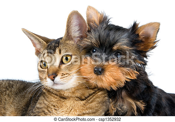 Kitten and the puppy - csp1352932