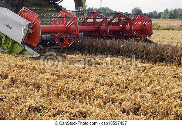 closeup combine harvest wheat agriculture field - csp13537437