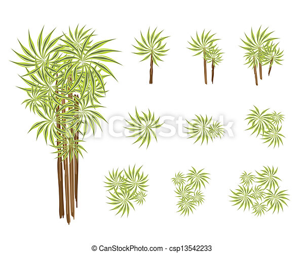 Yucca Plant Drawing Dracaena Plant or Yucca Tree