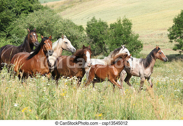 Batch of horses running in flowers - csp13545012