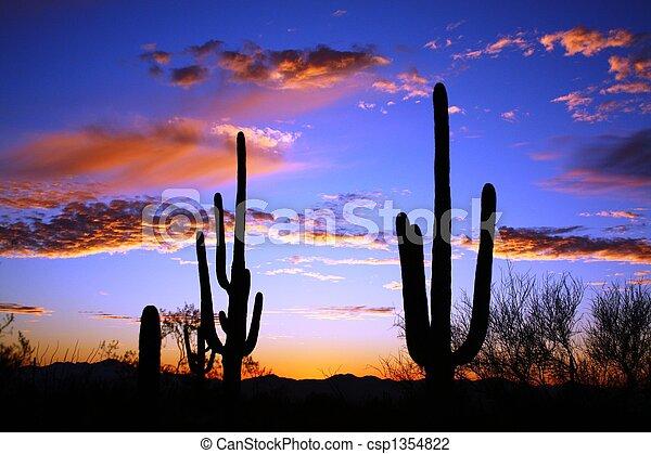 Saguaro Desert  Sunset - csp1354822