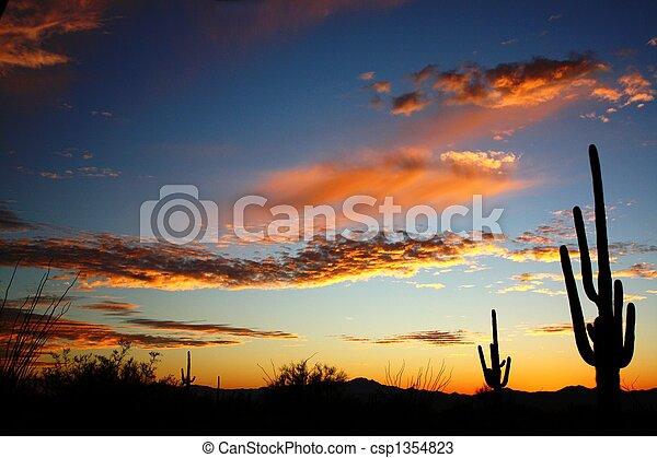 Saguaro Desert sunset - csp1354823