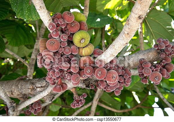 turco, Marrom, figo, crescendo, árvore - csp13550677