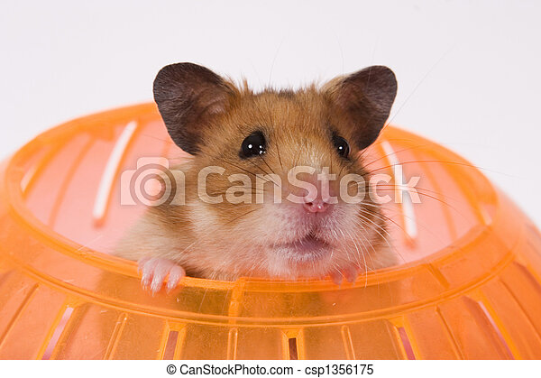 Hamster Popping his Head out of a Ball - csp1356175