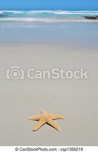 Starfish on beach - csp1356219