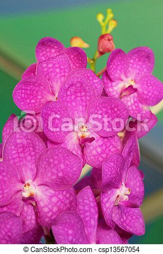 photo orchid e vanda rose fleurs image images photo libre de droits photos sous. Black Bedroom Furniture Sets. Home Design Ideas