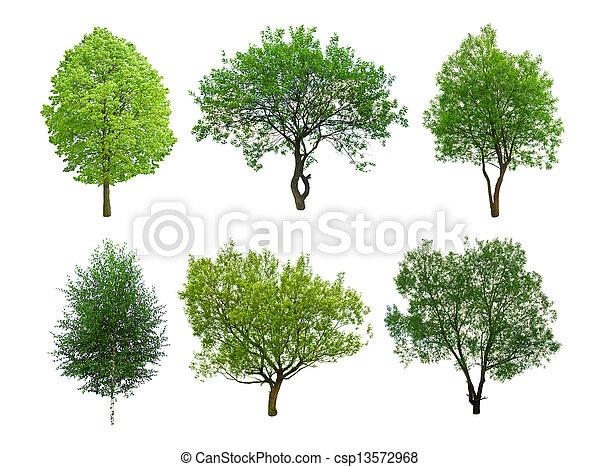 樹 - csp13572968