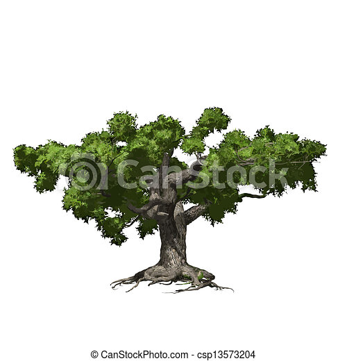 Vector Clipart of Oak tree isolated. Vector illustration ...