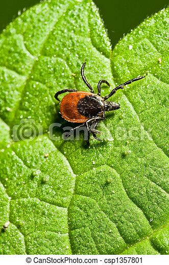 Tick on leaf. Ixodes ricinus. - csp1357801