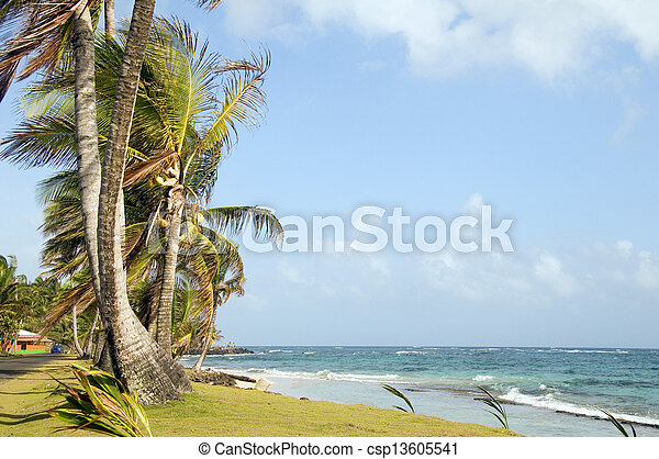 undeveloped Sally Peach beach palm trees on Caribbean Sea with native building Big Corn Island Nicaragua Central America - csp13605541