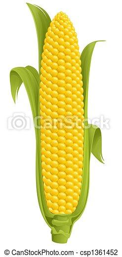 Corn - csp1361452