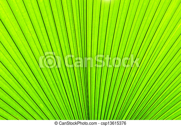 Green texture of palm tree leaf. Nature background - csp13615376