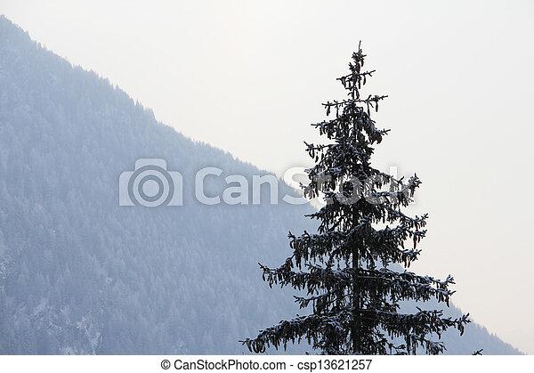 Fir-tree in winter mountains