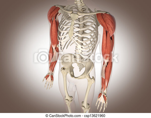 Man skeleton with internal organs. 3 D digital rendering. - csp13621960