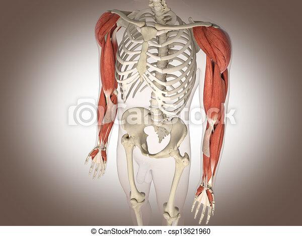 Man skeleton with internal organs. 3 D digital rendering. - csp13621960