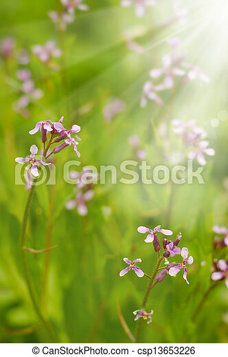 Field wild flowers closeup - csp13653226
