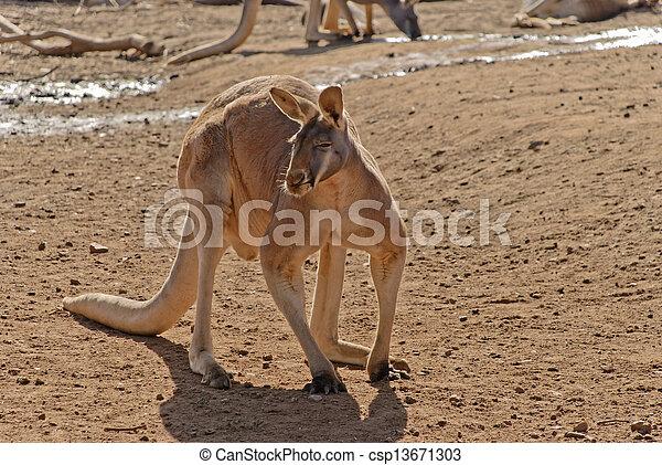 mammal - csp13671303
