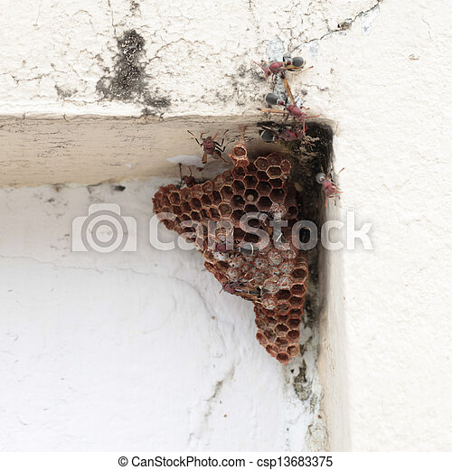 how to kill a hornets nest in the wall