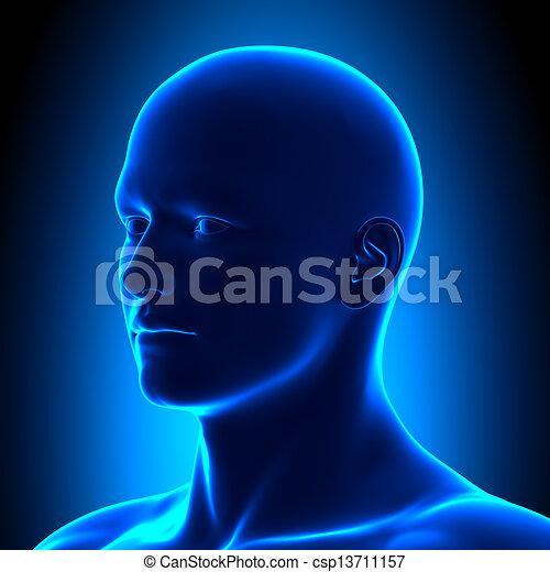 Anatomy Head - Iso View Detail - Bl - csp13711157