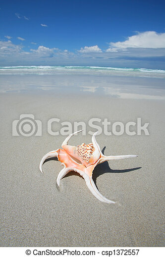 Shell on a tropical beach - csp1372557