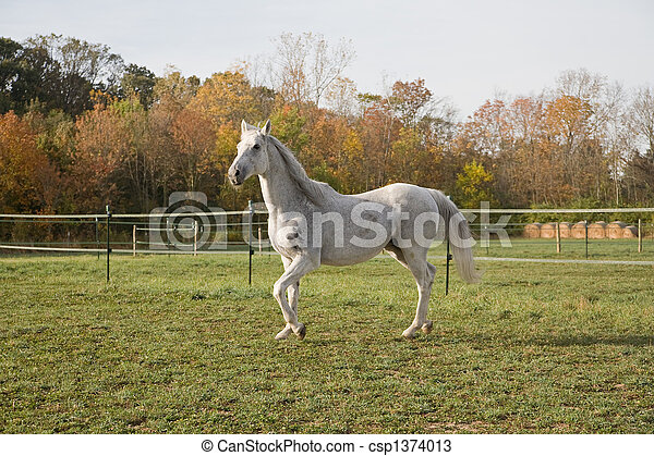 Thoroughbred Horse - csp1374013
