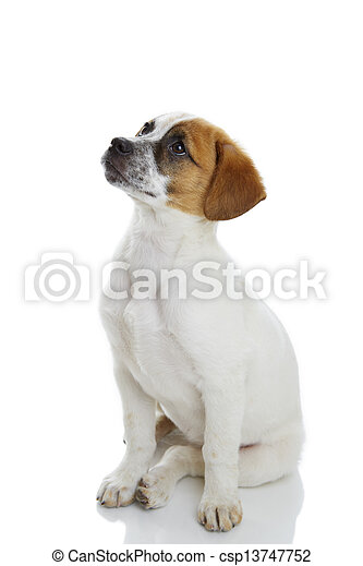 Obedient sitting dog - csp13747752