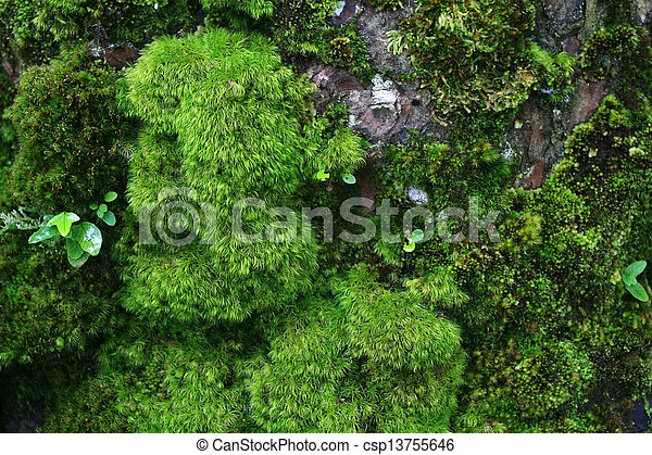 Green wet moss - csp13755646