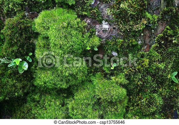 Green wet moss - csp13755646
