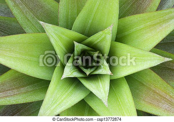 Closeup on pineapple plant - csp13772874