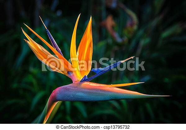 Exotic Birds Exotic Birds