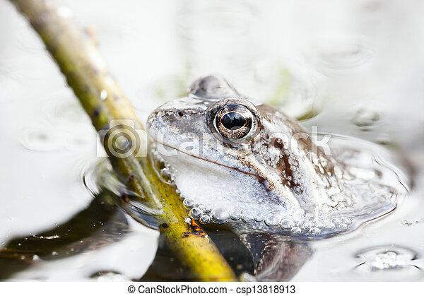 Frog in water - csp13818913