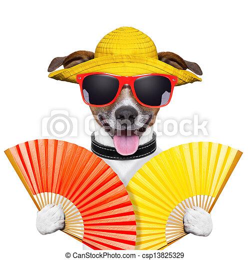 summer dog - csp13825329