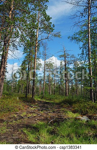 Footpath - csp1383341