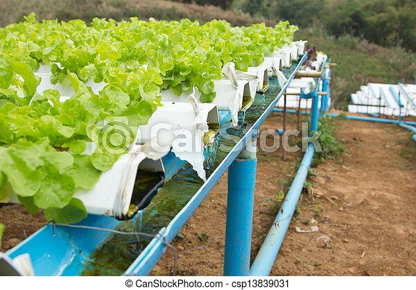 Hydroponic vegetable farm  - csp13839031
