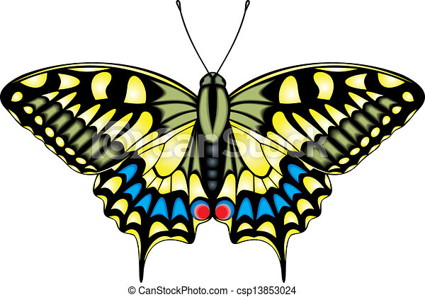 butterfly - csp13853024