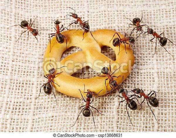 ants solving problem of cake transportation, teamwork - csp13868631