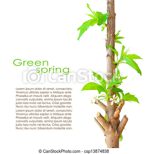 Spring card design - csp13874838
