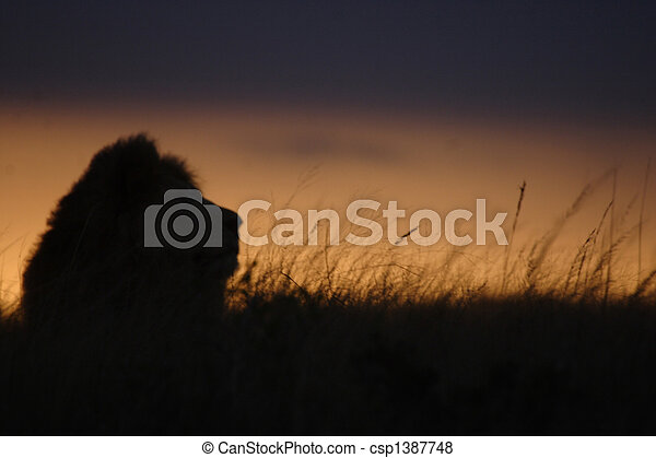 Lion of the Long Grass