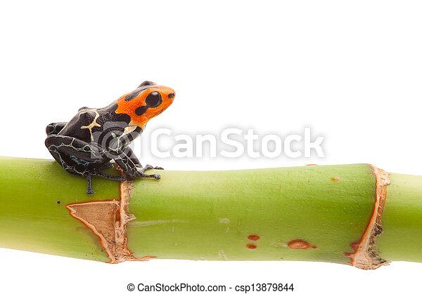 隔離された, 矢, カエル, 毒 - csp13879844