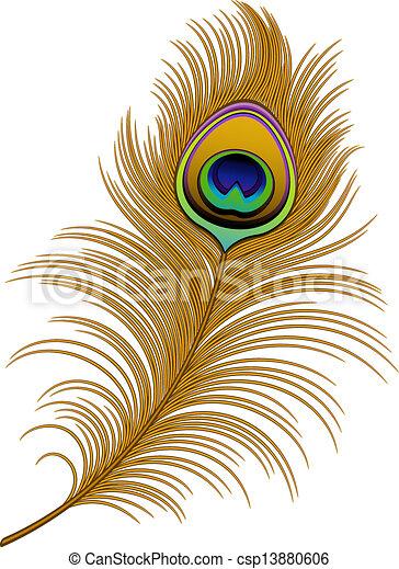 Clipart vecteur de paon plume sur blanc eps 10 ai jpeg csp13880606 recherchez des - Plume de paon dessin ...
