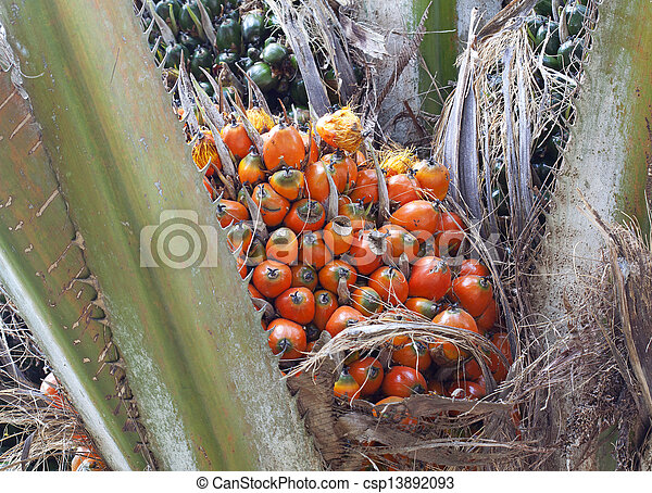 stock photographs of palm oil a well balanced healthy edible oil is now an csp13892093. Black Bedroom Furniture Sets. Home Design Ideas