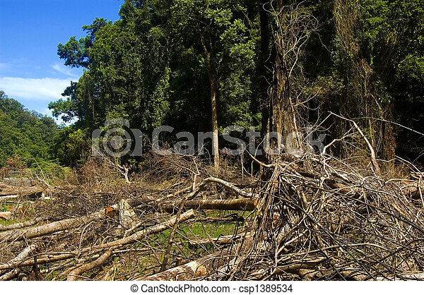 Trees are slashed and burned to give way to farming - csp1389534