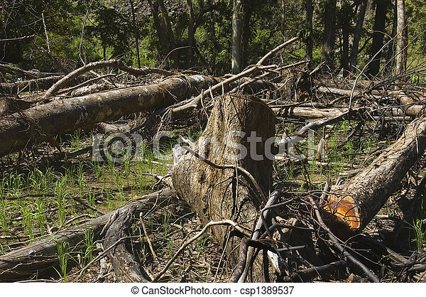 Trees are slashed and burned to give way to farming - csp1389537