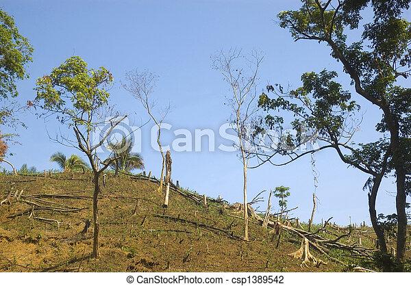 Forest destruction - csp1389542