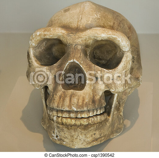 641 Skull from indigenous native in Peru - csp1390542