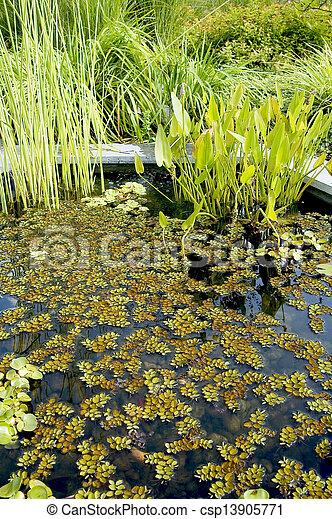 garden pond - csp13905771