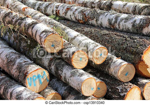 Birch Logs Detail - csp13910340