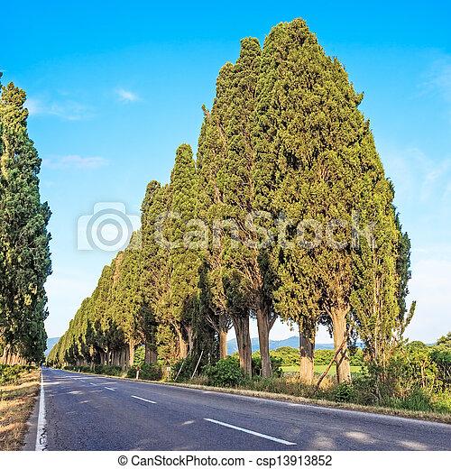 Bolgheri famous cypresses tree boulevard landscape. Tuscany landmark, Italy - csp13913852