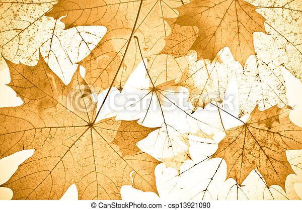 autumn maple leaves - csp13921090